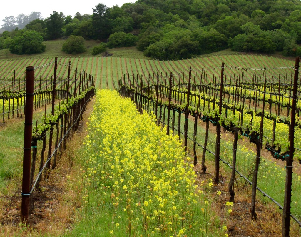Springtime at Windsor Oaks Vineyards & Winery